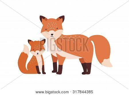 Fox With Cub Or Pup Isolated On White Background. Family Of Funny Wild Carnivorous Forest Animals. P