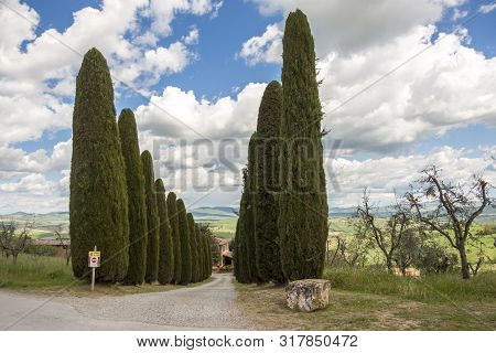 View On Cypress Alley In Toscany, Italy.