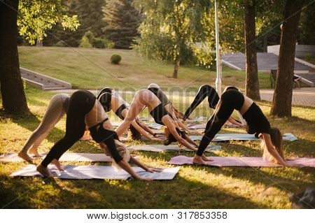 Group Of Young Sporty People Doing Are Yoga Pose Adho Mukha Svanasana In City Park At Dawn On Summer