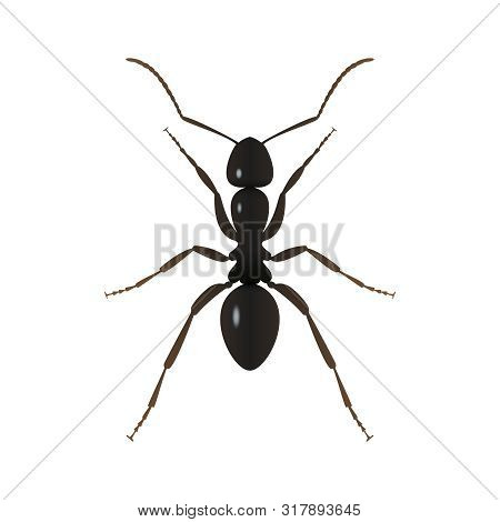 Ant close up graphic icon. Ant black sign isolated on white background. Vector illustration
