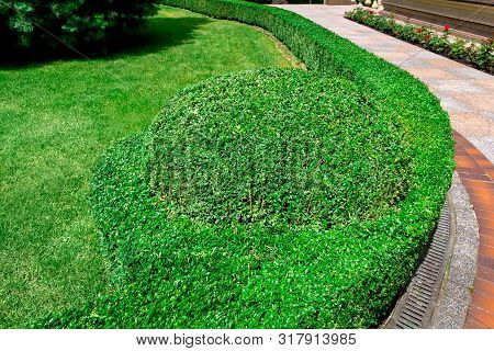 landscape design hedge of boxwood bushes and a green lawn in the backyard of a residential building with a flower bed. poster