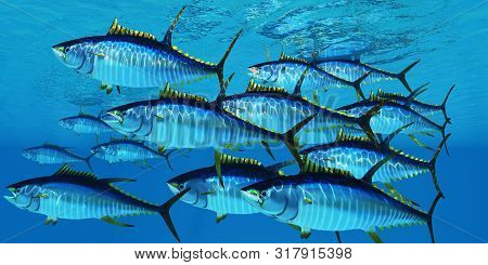 School of Yellowfin Tuna 3d illustration - Yellowfin tuna fish swim in large groups looking for their prey such as large schools of ocean herring fish. poster