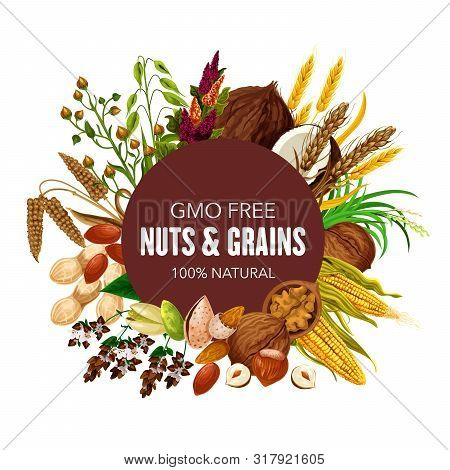 Nuts, Organic Cereals And Healthy Food Grain. Vector Gmo Free Superfood Coconut, Wheat And Rye Or Bu