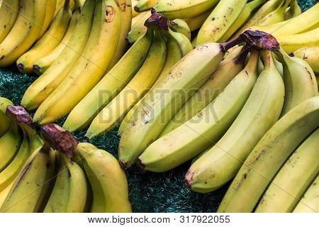 Bunch Of Green Yellow Bananas On Grass