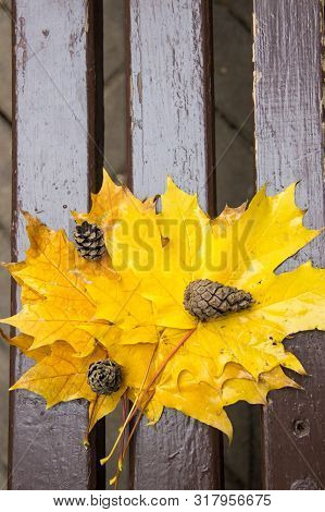 Vibrant Wet Golden Fallen Leaves Of Maple And Three Pine Cones On A Brown Wood Brench In Autumn Park