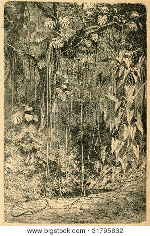 Philodendrons i subtropisk skog - gammal illustration av okänd konstnär från Botanika Szkolna na Kl