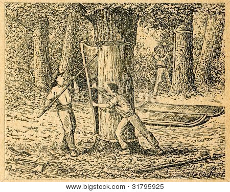 Skörd kork från Korka oaks - gammal illustration av okänd konstnär från Botanika Szkolna na Klasy N