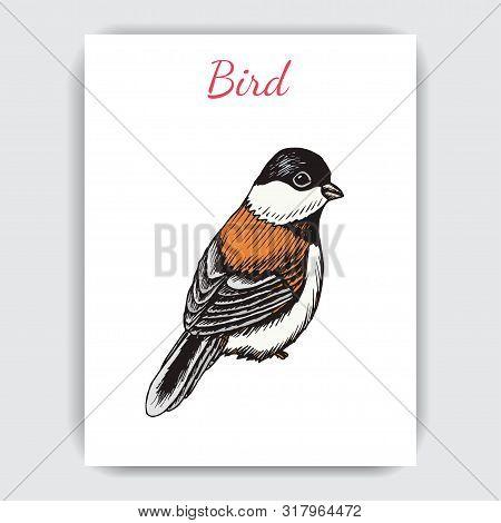 Sketch Hand Drawn Card With Sparrow. Animals Illustration Birds.
