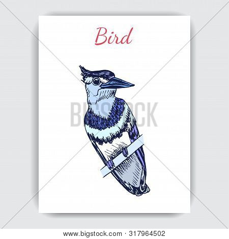 Sketch Hand Drawn Card With Blue Jay. Animals Illustration Birds.