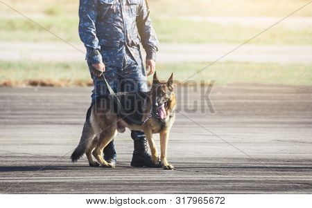 Soldiers from the  K-9 unit demonstrations to attack the enemy , the green lawns. learn the human language. Dogs can follow orders well. German Shepherd dog stand. poster