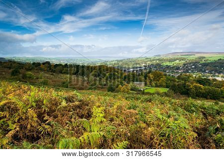 Autumn Heather Showing Green And Russet Colours On Ilkley Moor, Yorkshire