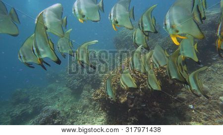 Tropical Fishes On Coral Reef, Underwater Scene. Camiguin, Philippines. Travel Vacation Concept
