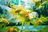 underwater image of reef and colorful fishes poster