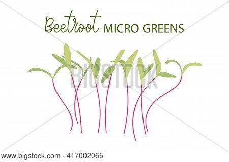 Hand Drawn Beetroot Microgreens. Healthy Food. Beet Sprouts With Green Leaves Isolated On White Back