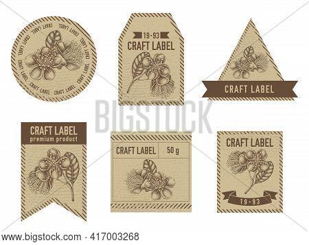 Craft Labels Vintage Design With Illustration Of Feijoa Flowers Stock Illustration