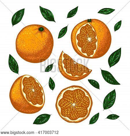 Set With Bright Sunny Oranges. Vector Stylized Illustration Isolated On A White Background.