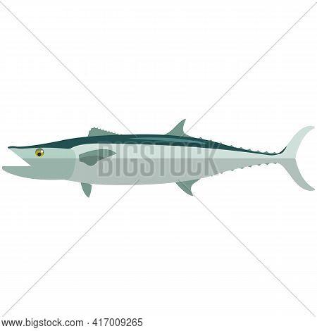 Vector Fish Barracuda Sea Underwater Mackerel Species
