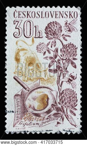 ZAGREB, CROATIA - SEPTEMBER 18, 2014: Stamp printed in Czechoslovakia shows clover, bee and honey, Series Agricultural produce, circa 1961