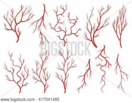Collection Of Human Veins. Red Silhouette Vessels, Arteries Or Capillaries On White Background. Conc