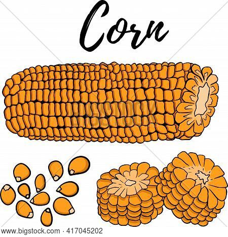 Vector Hand Drawn Set Of Farm Vegetables. Isolated Corn Cobs. Engraved Art. Organic Sketched Vegetar