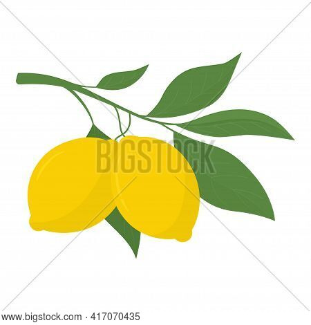 Two Yellow Lemons On A Branch. Lemon Is A Sour Fruit High In Vitamin C. Vector Illustration