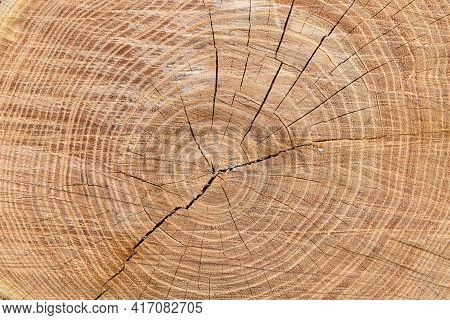 Annual Rings On A Cut Of A Large Tree Provide Information About The Climate
