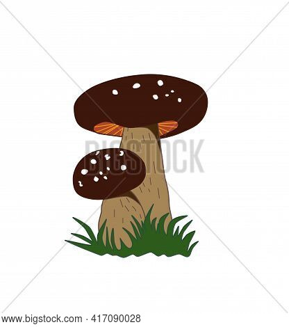 King Bolete . Great For Using A Vegetarian Recipe Or A Travel Guide Design. Vector Color Illustratio