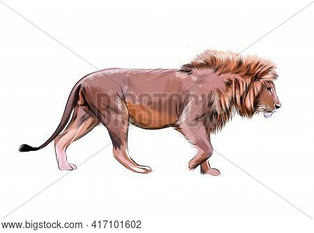 Portrait Of A Lion From A Splash Of Watercolor, Hand Drawn Sketch. Vector Illustration Of Paints