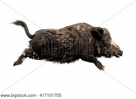 Boar From A Splash Of Watercolor, Colored Drawing, Realistic. Vector Illustration Of Paints