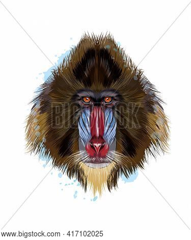 Monkey Mandrill Head Portrait From A Splash Of Watercolor, Colored Drawing, Realistic. Vector Illust