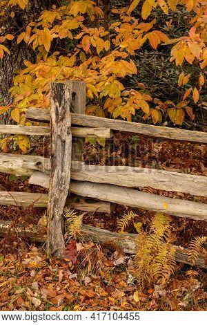 Split Rail Fence Post And Golden Leaves Along Blue Ridge Parkway