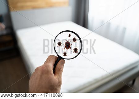 Parasite Infested Dirty Linen In Bedroom At Home