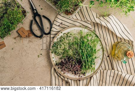 Healthy Microgreen Salad With Rucola, Peas, Broccoli And Radish. Vegan Diet Concept. Top View.