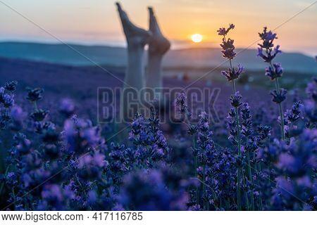 Selective Focus. Slender Ballerina Girl Legs In Lavender Bushes, Warm Sunset Light. Bushes Of Purple