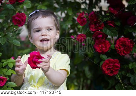 Beautiful Little Girl Among A Bush Of Scarlet Roses. Portrait Of A One-year-old Baby.