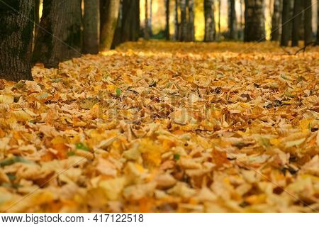 Empty Abandoned Path In The Forest, Woodland. Alley Autumn City Park With Covering Ground Yellow Dry