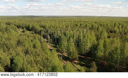 Green Coniferous Deciduous Forest Top View. Coniferous And Deciduous Summer Forest From A Height.
