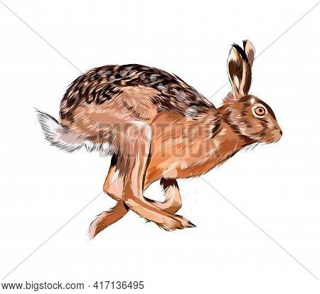 Hare, Rabbit From A Splash Of Watercolor, Colored Drawing, Realistic. Vector Illustration Of Paints