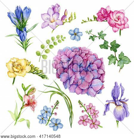 Garden Flower Set. Freesia, Forget-me-not, Iris, Hydrangea, Ivy, Hedera Floral Element Collection. W