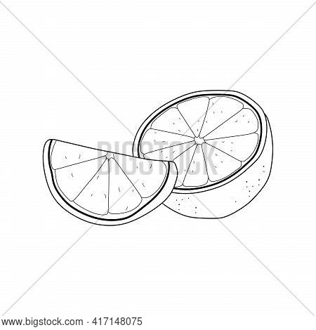 vector graphic of lemon line icon isolated on white background. lemon sketch.