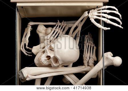 Skeleton In Drawer