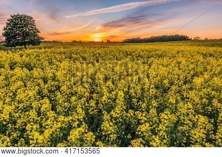 Landscape At Sunset. Evening Mood With A Rapeseed Field In Yellow Bloom In Summer. Clouds In The Sky