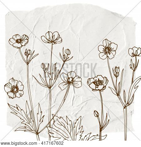 Flowers And Herbs Line On Watercolor Background