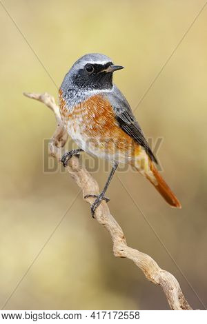 A Closeup Shot Of A Brambling Bird Perched On A Branch With A Blurred Background