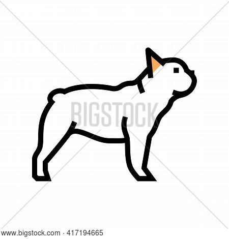 French Bulldog Dog Color Icon Vector. French Bulldog Dog Sign. Isolated Symbol Illustration