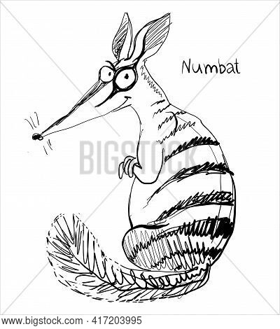 Vector. Graphic Black And White Sketch Of A Funny Numbat.
