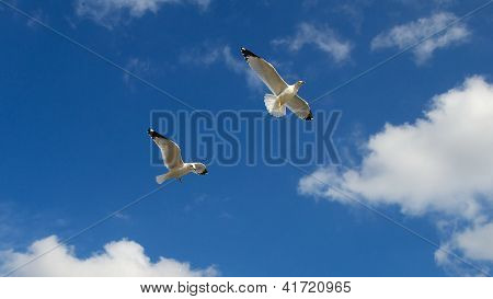 Two seagulls flying together against a beautiful blue sky.
