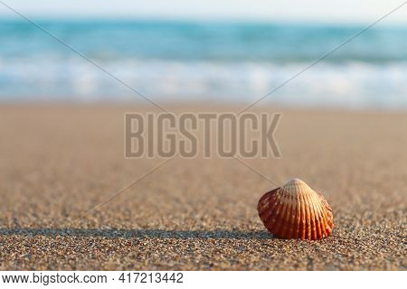 Seashell On Sandy Beach Close-up. Concept Of Summer, Beach Vacation. Selective Focus, Copy Space For