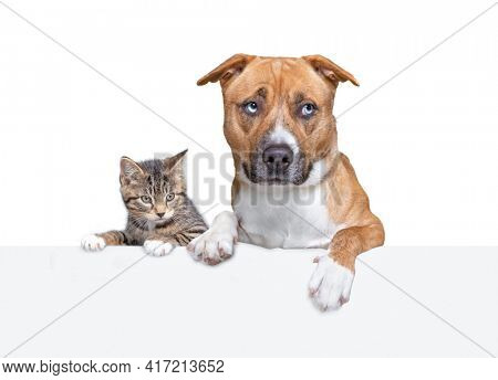 cute kitten and dog portrait on a white isolated background holding a sign