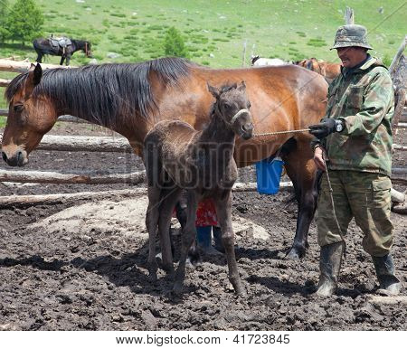 A Man And A Woman Milking A Horse